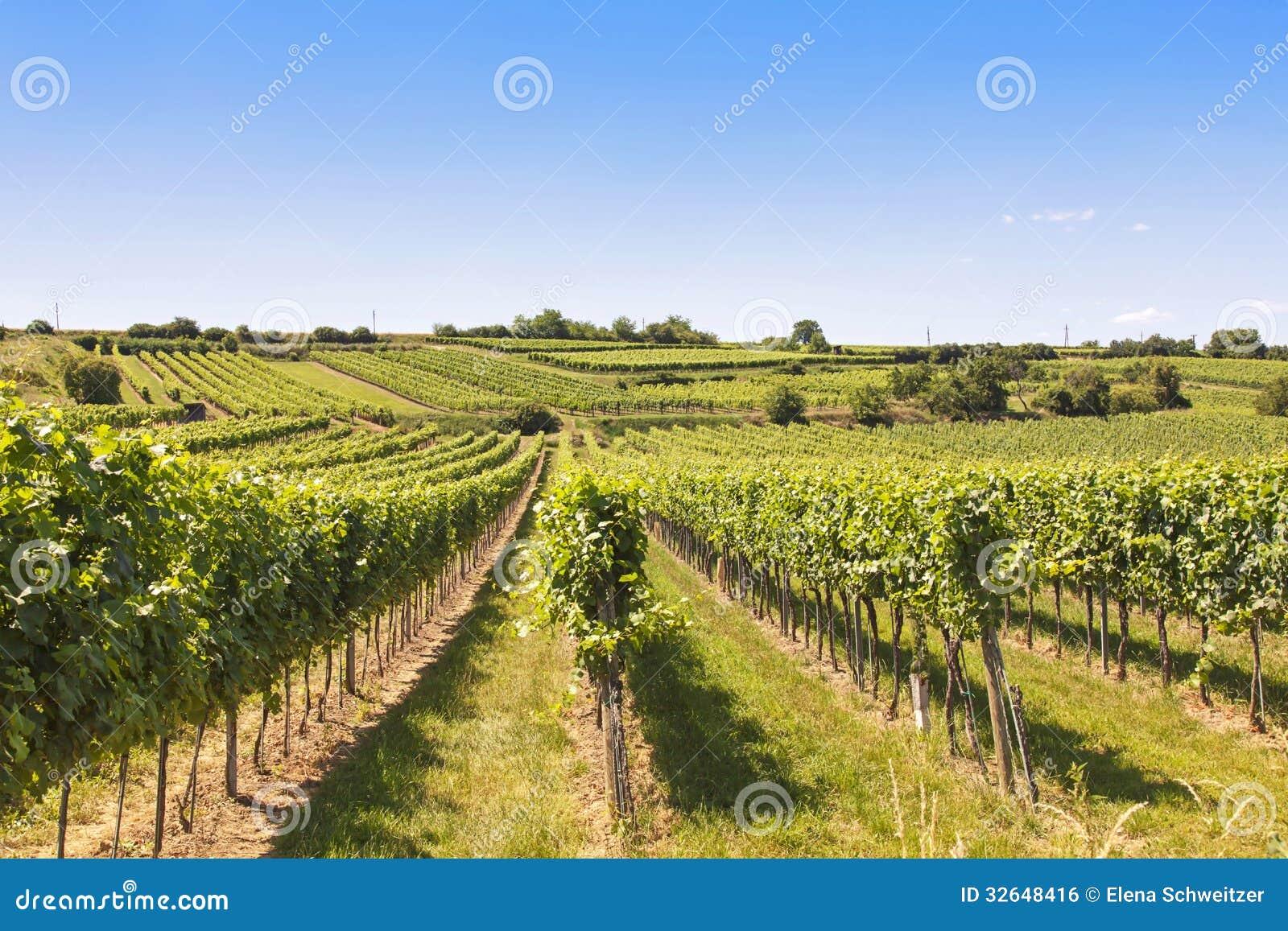 Виноградники благоустраивают в Wachau
