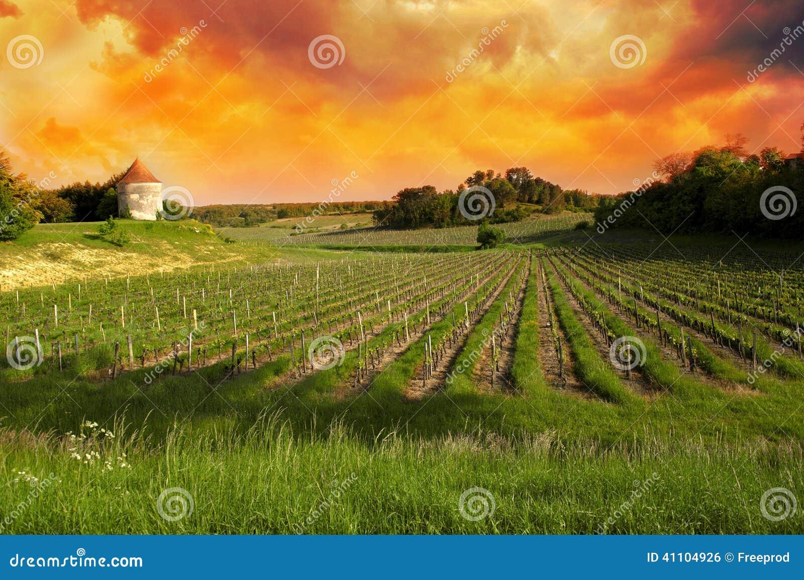 Виноградники Святого Emilion, виноградников Бордо