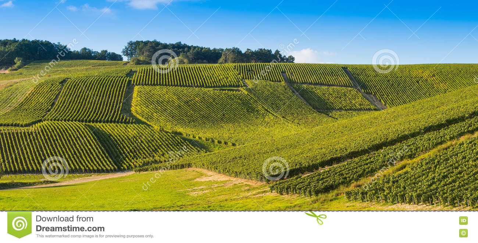 Виноградники Шампани в des Коута запирают об