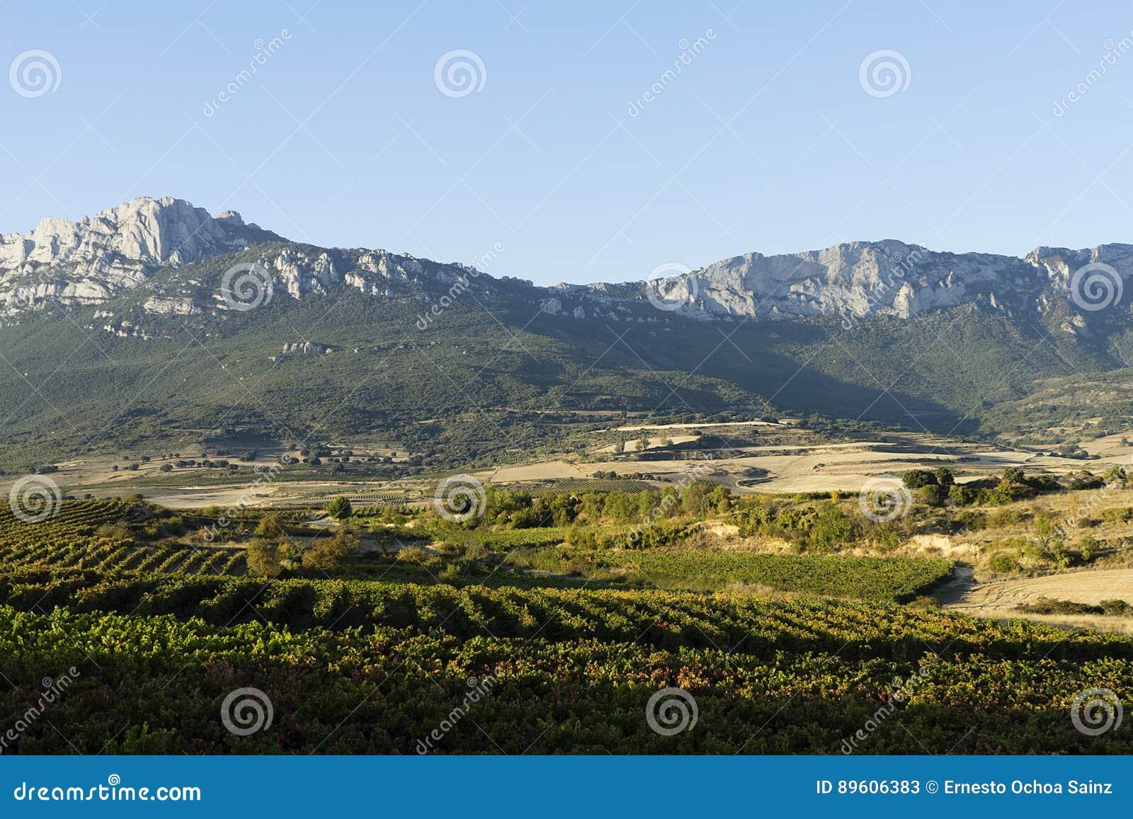 Виноградники Rioja
