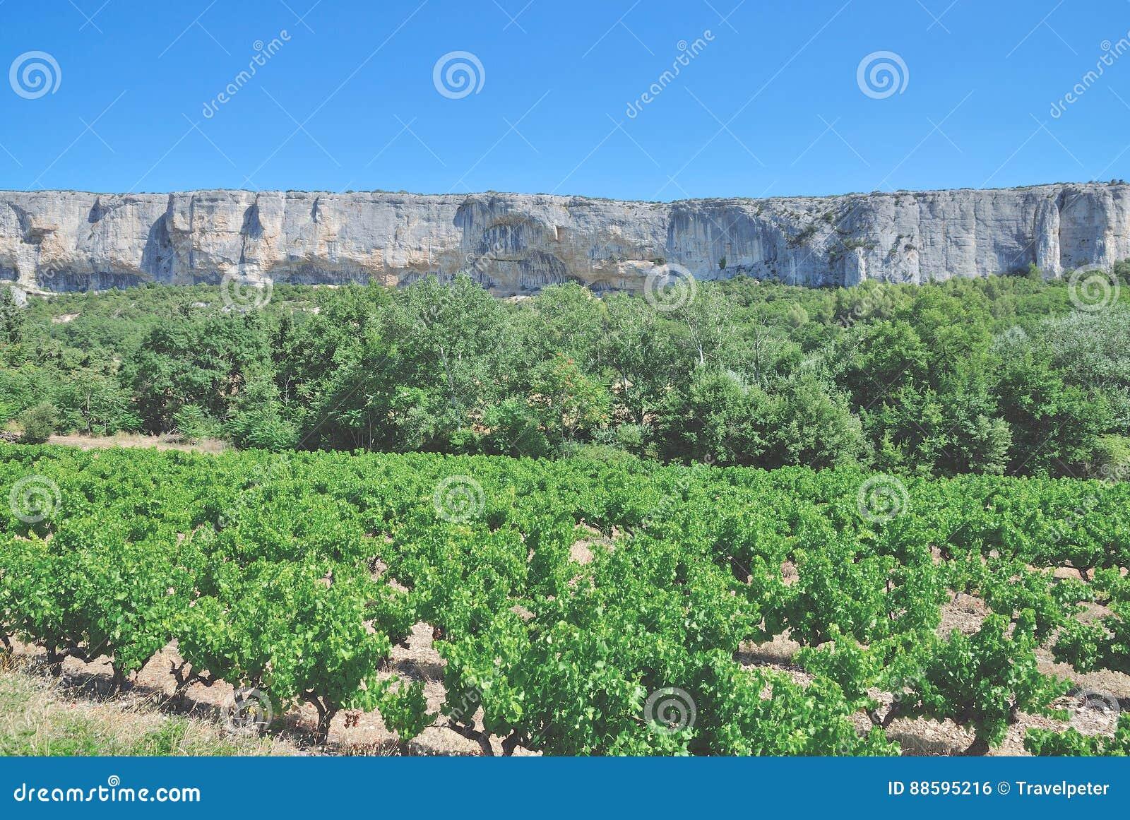 Виноградник, Коут de Провансаль, Франция