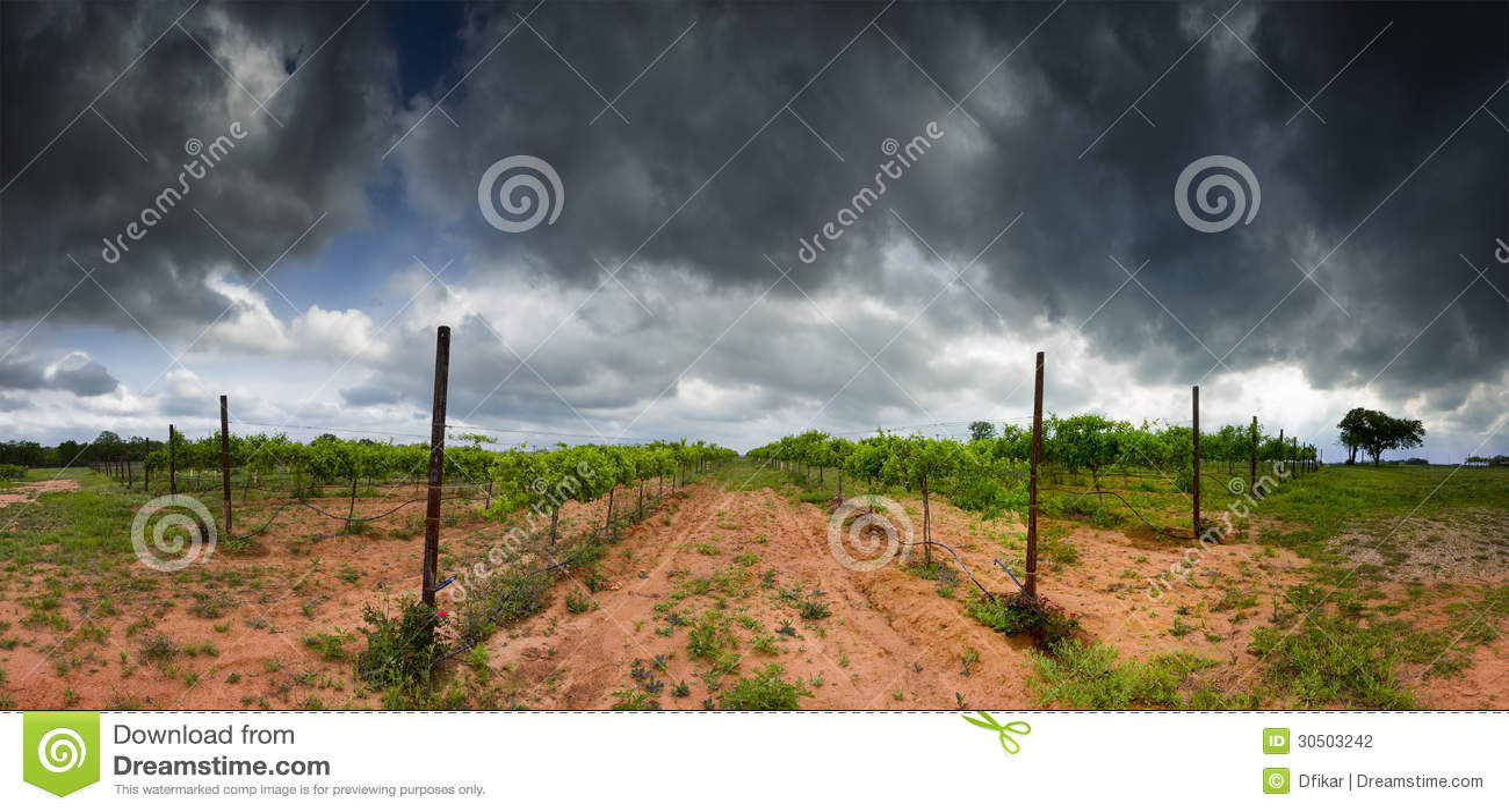 Виноградник страны холма Техаса