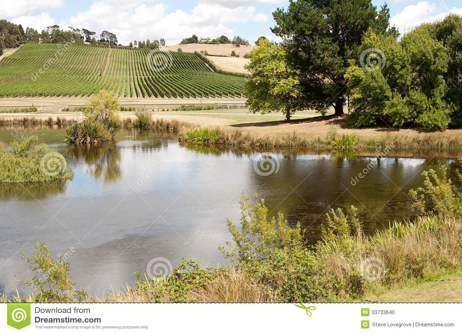Виноградник Тасмания