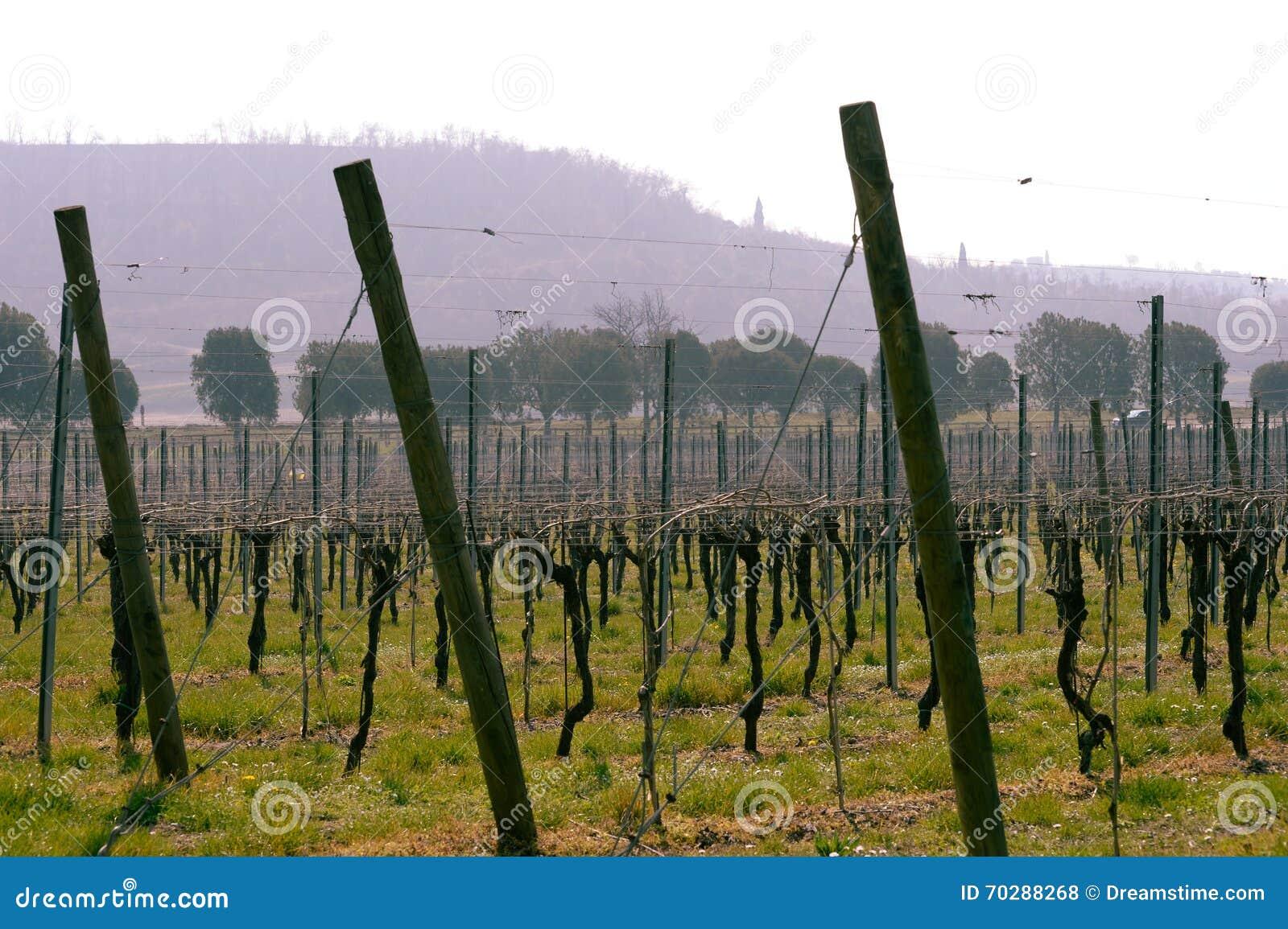 Вино полей виноградника итальянское