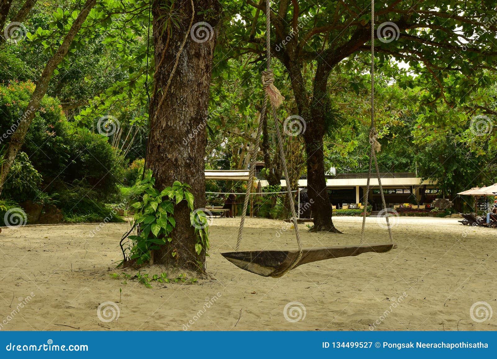 Винтажное деревянное качание около большого дерева на пляже песка