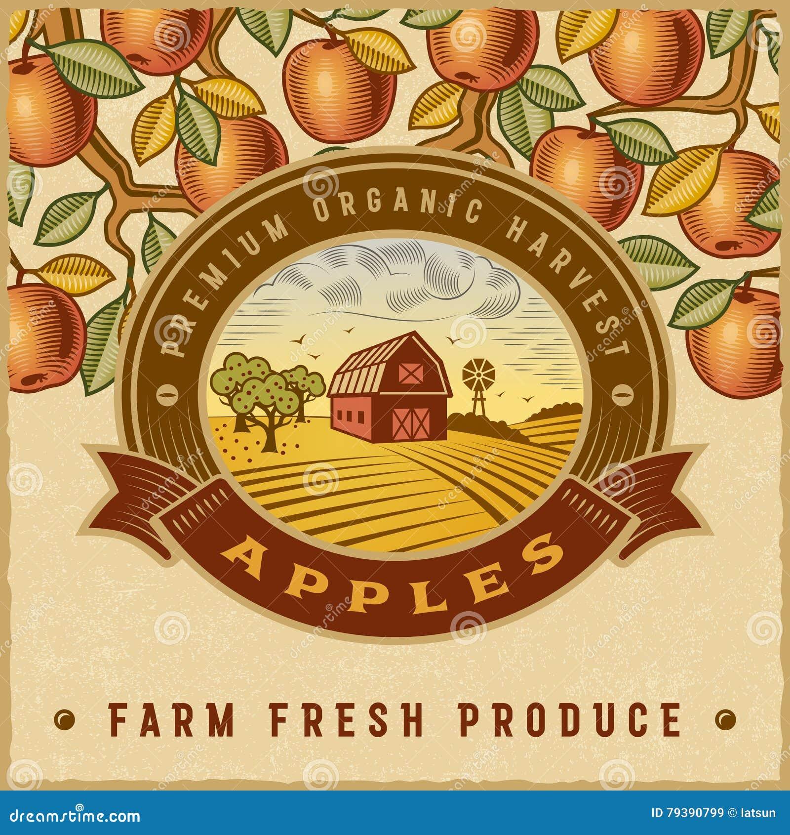 Винтажный красочный ярлык сбора яблока