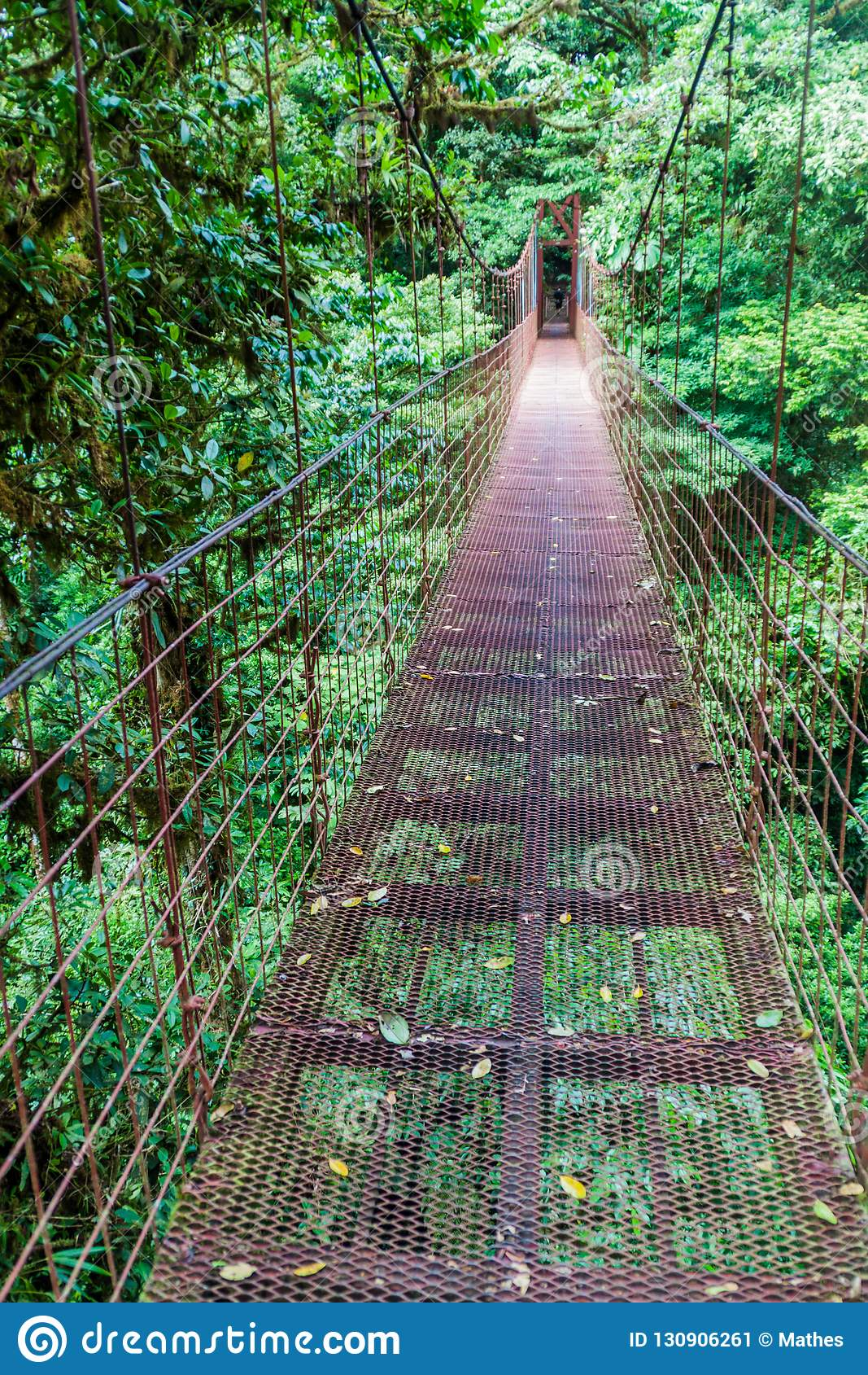 Висячий мост в лесе облака Reserva Biologica Bosque Nuboso Monteverde, Косты Ri