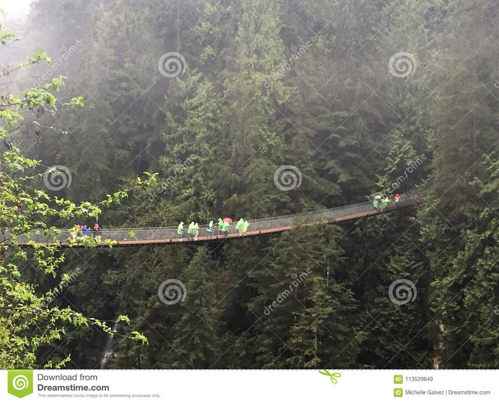 Висячий мост среди деревьев, Ванкувер Capilano, Канада