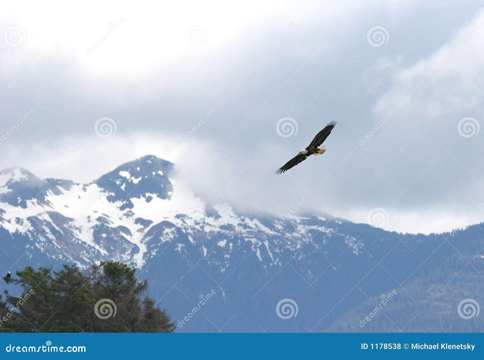 витать орла