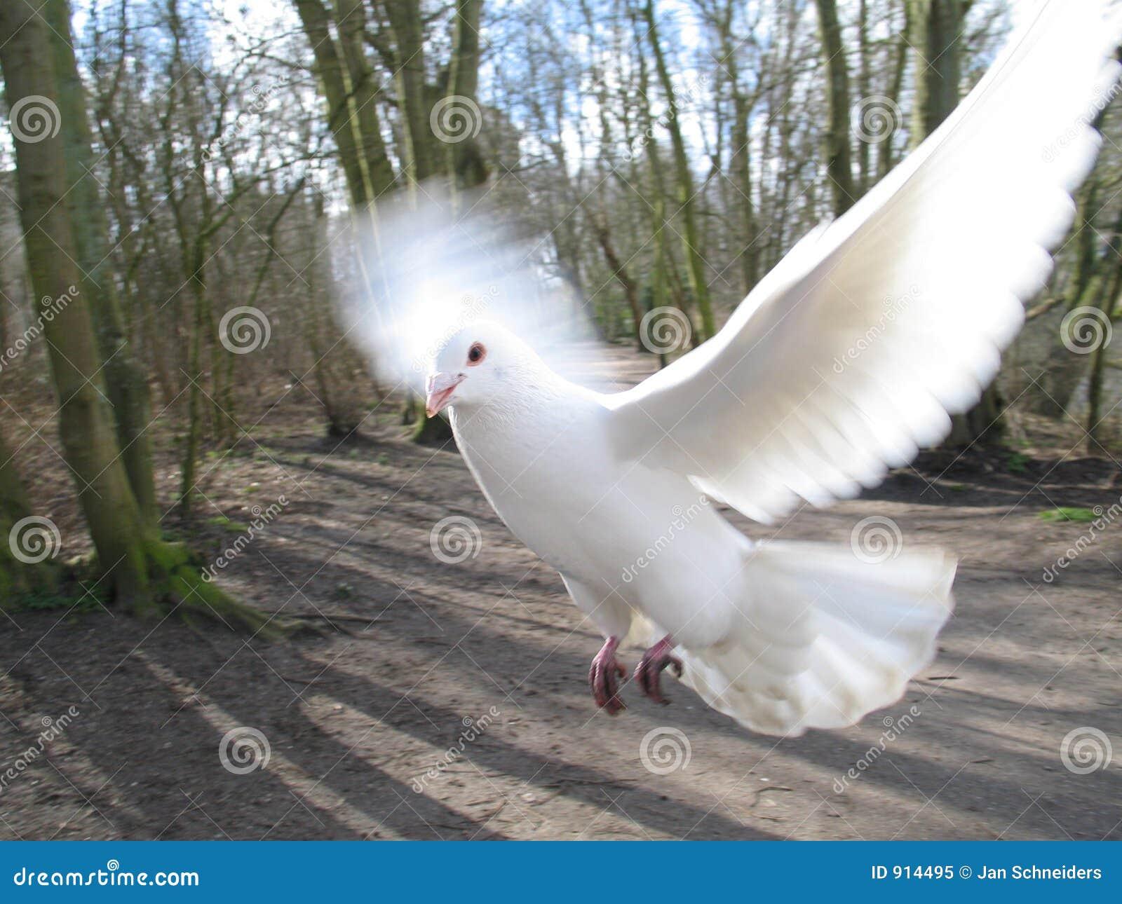 вихрун летания