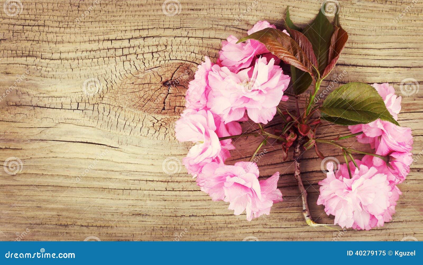 Вишневый цвет весны на старой деревянной предпосылке
