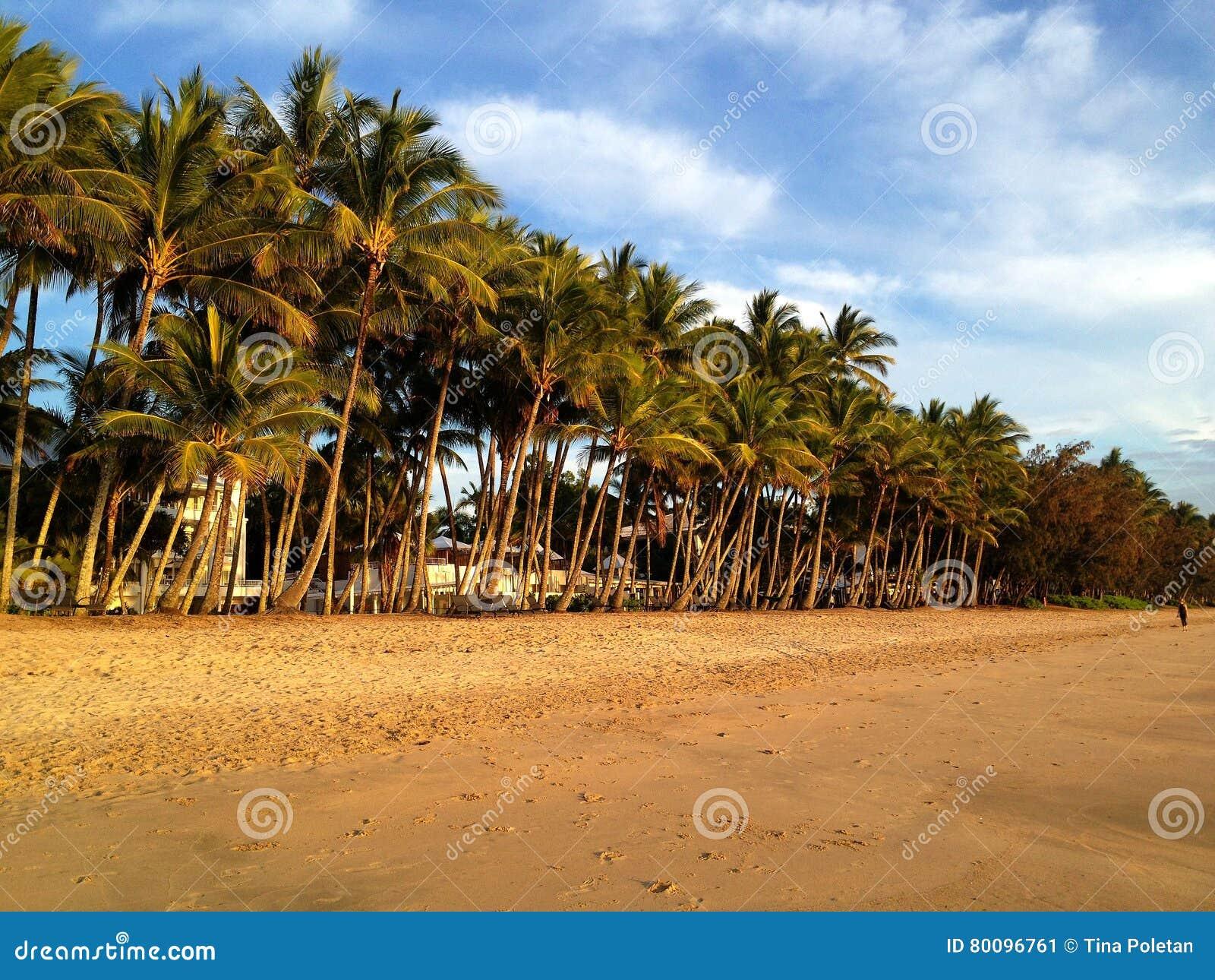 Вид на океан и пальмы