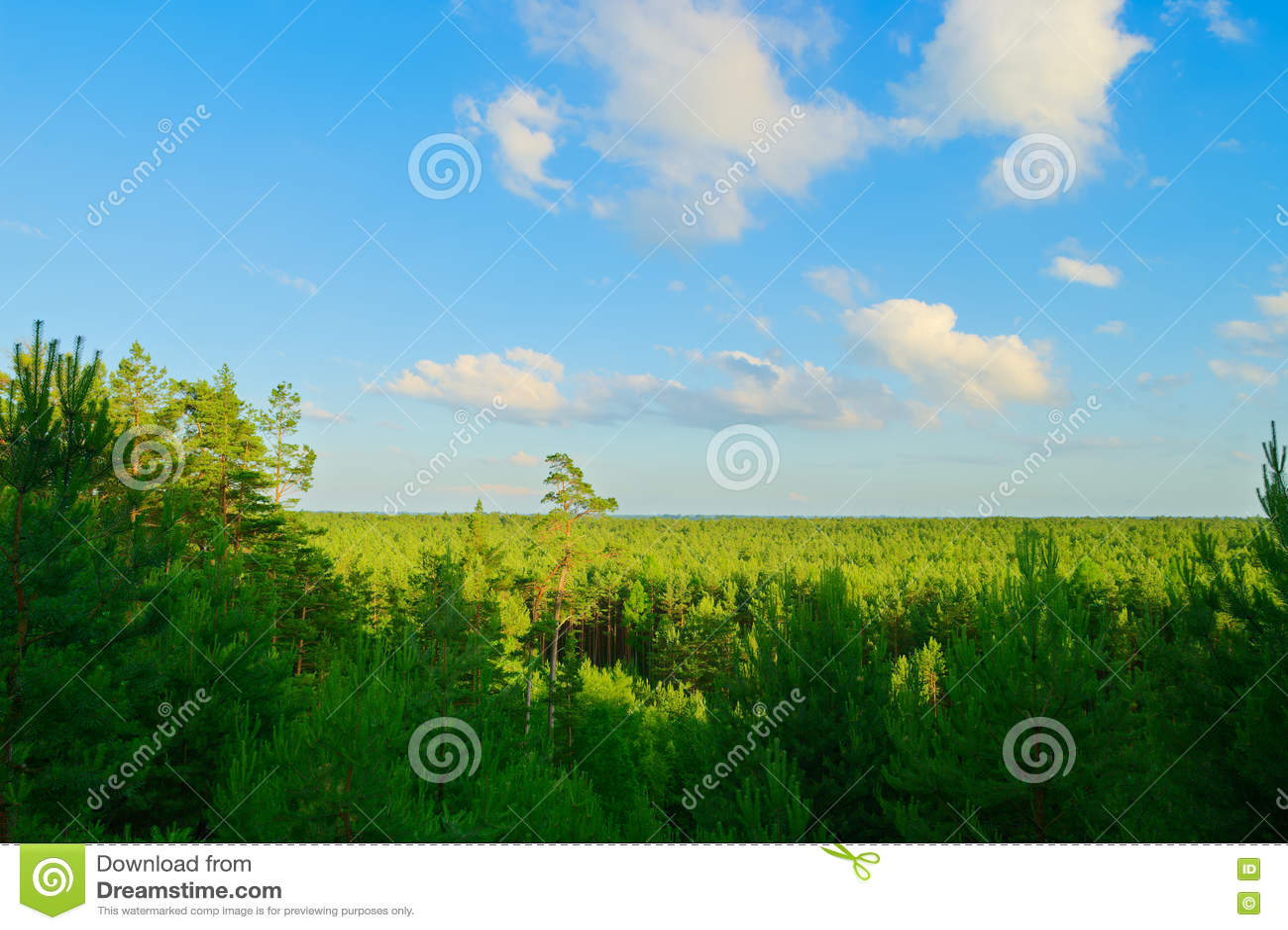 Вид с воздуха сосновой древесины
