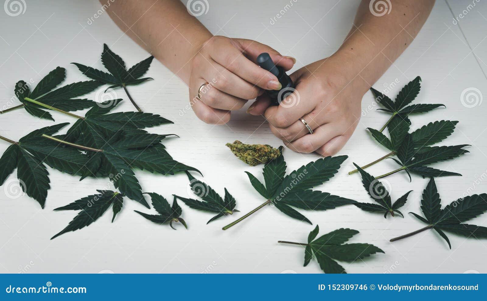 Листья молодой конопли кто покупал семена конопли в интернете