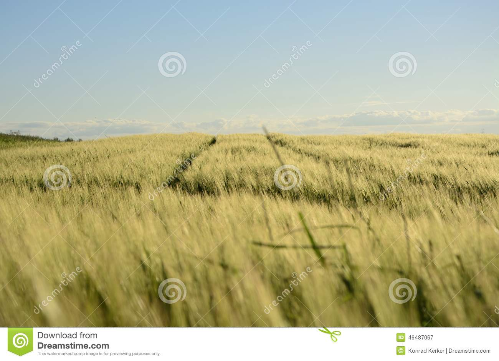 Вне города - сельского ландшафта - поле