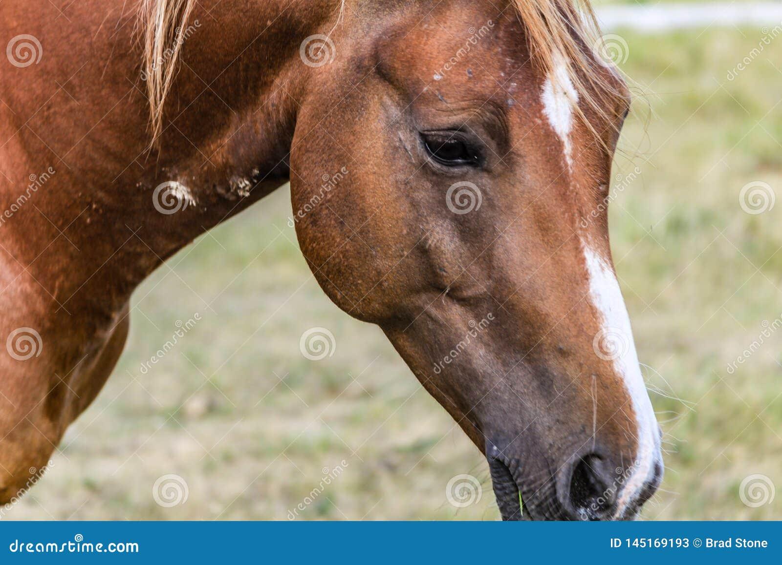Внимательная стоическая лошадь