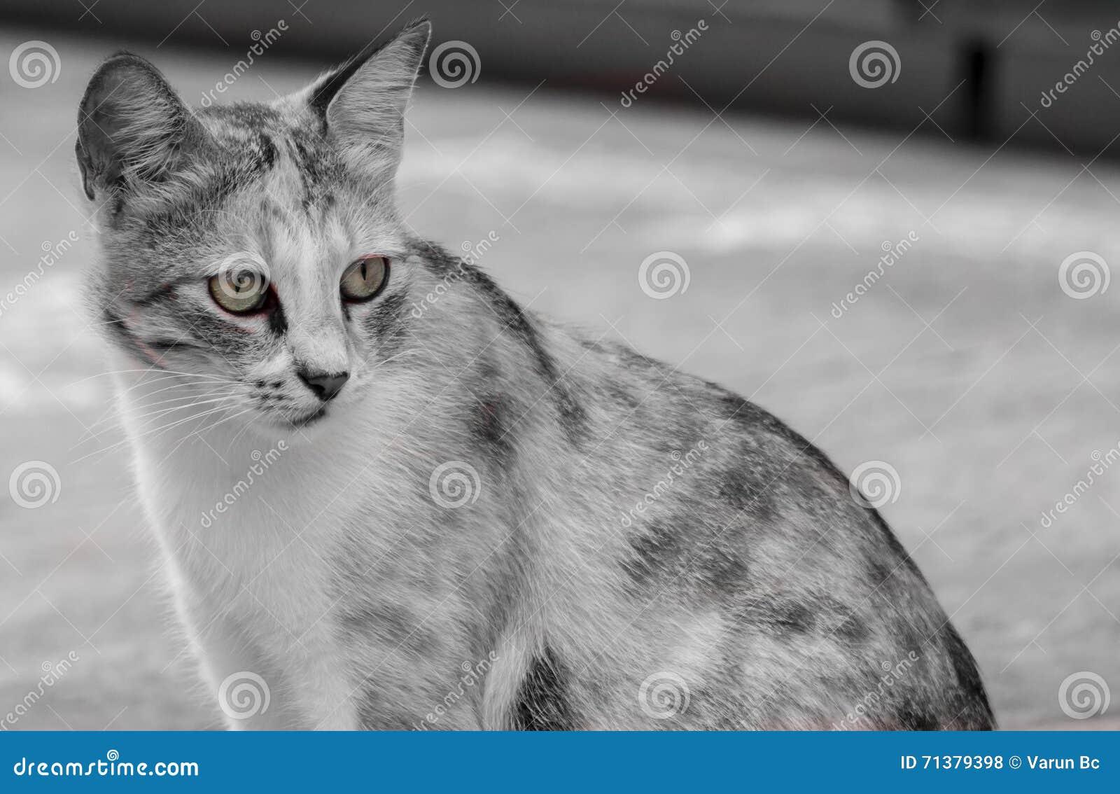 Внимательный кот