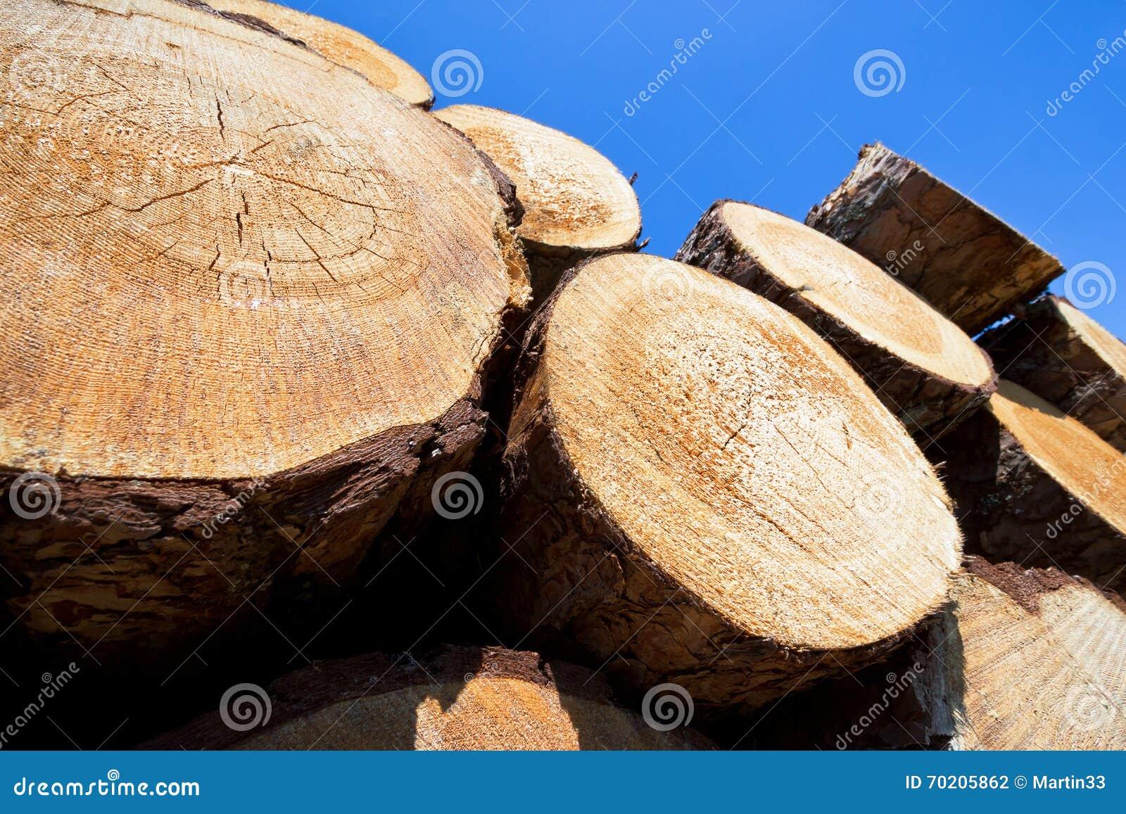 вносит деревянное в журнал