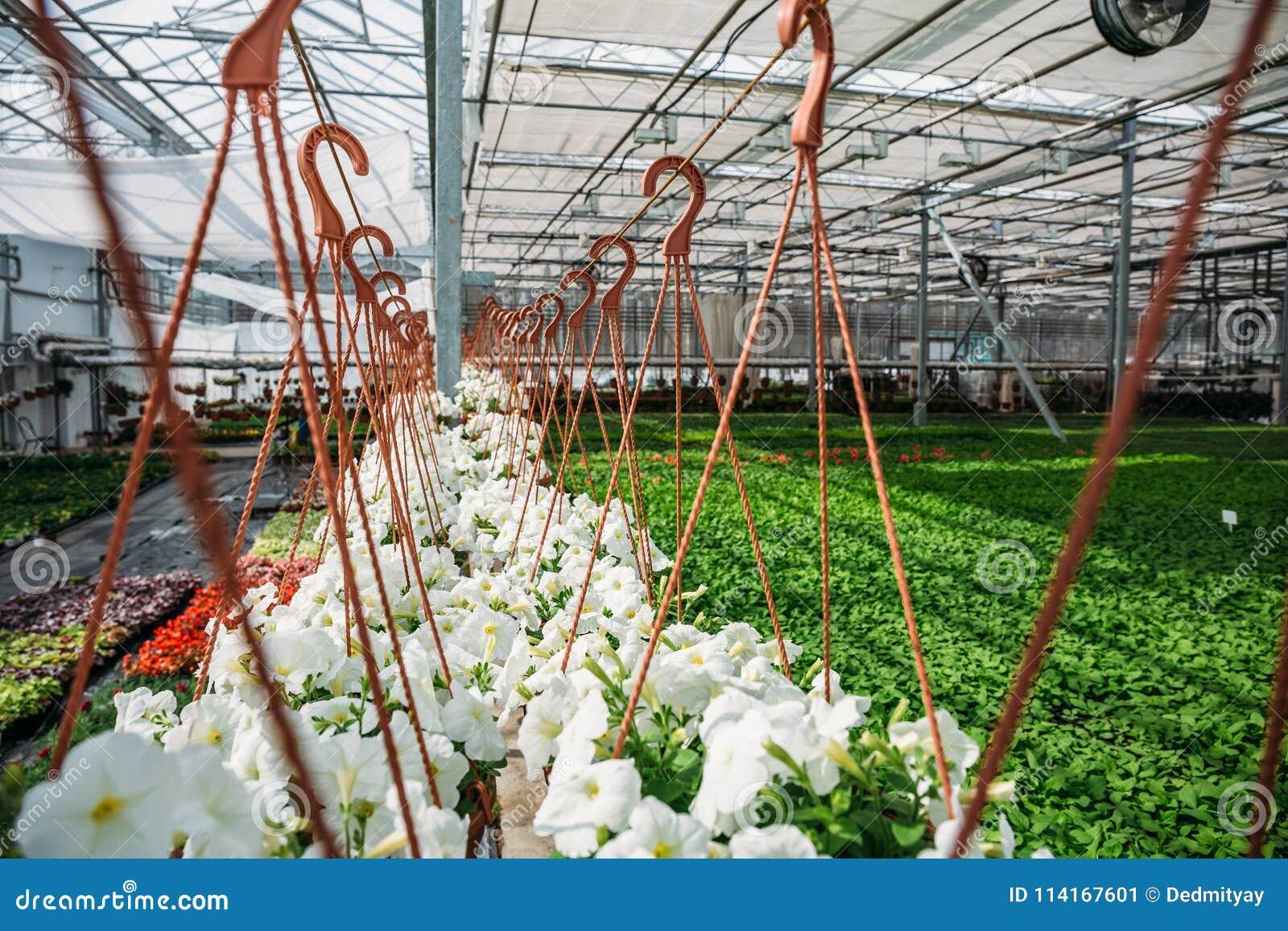 Внутренние новые современные hydroponic парник или оранжерея для культивирования декоративных цветков и заводов для садовничать