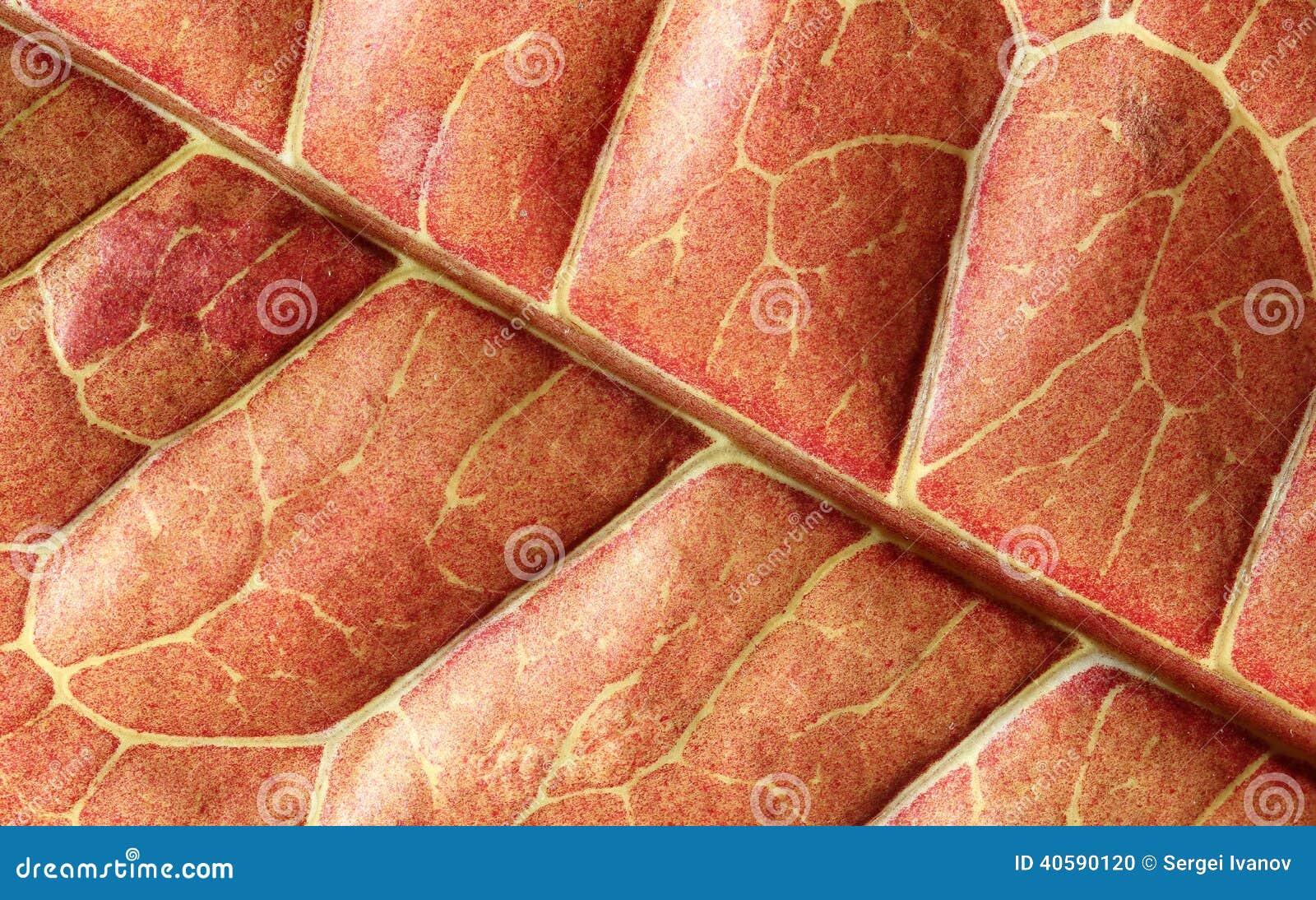 Внутренность заводов Croton лист - вне