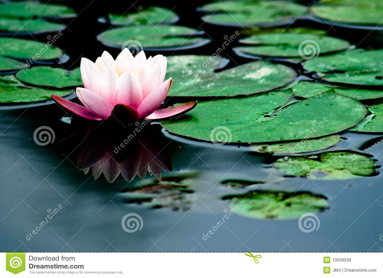 вода лилии