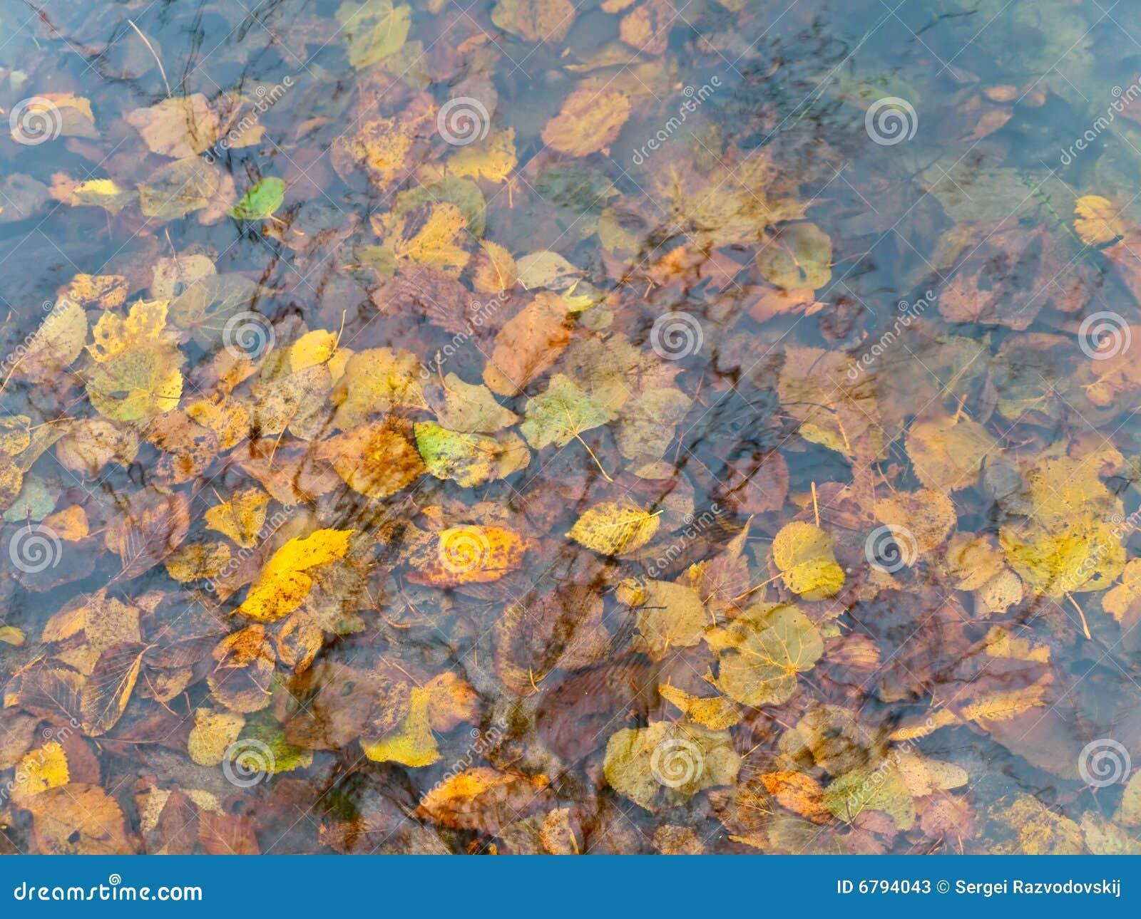 вода листьев осени