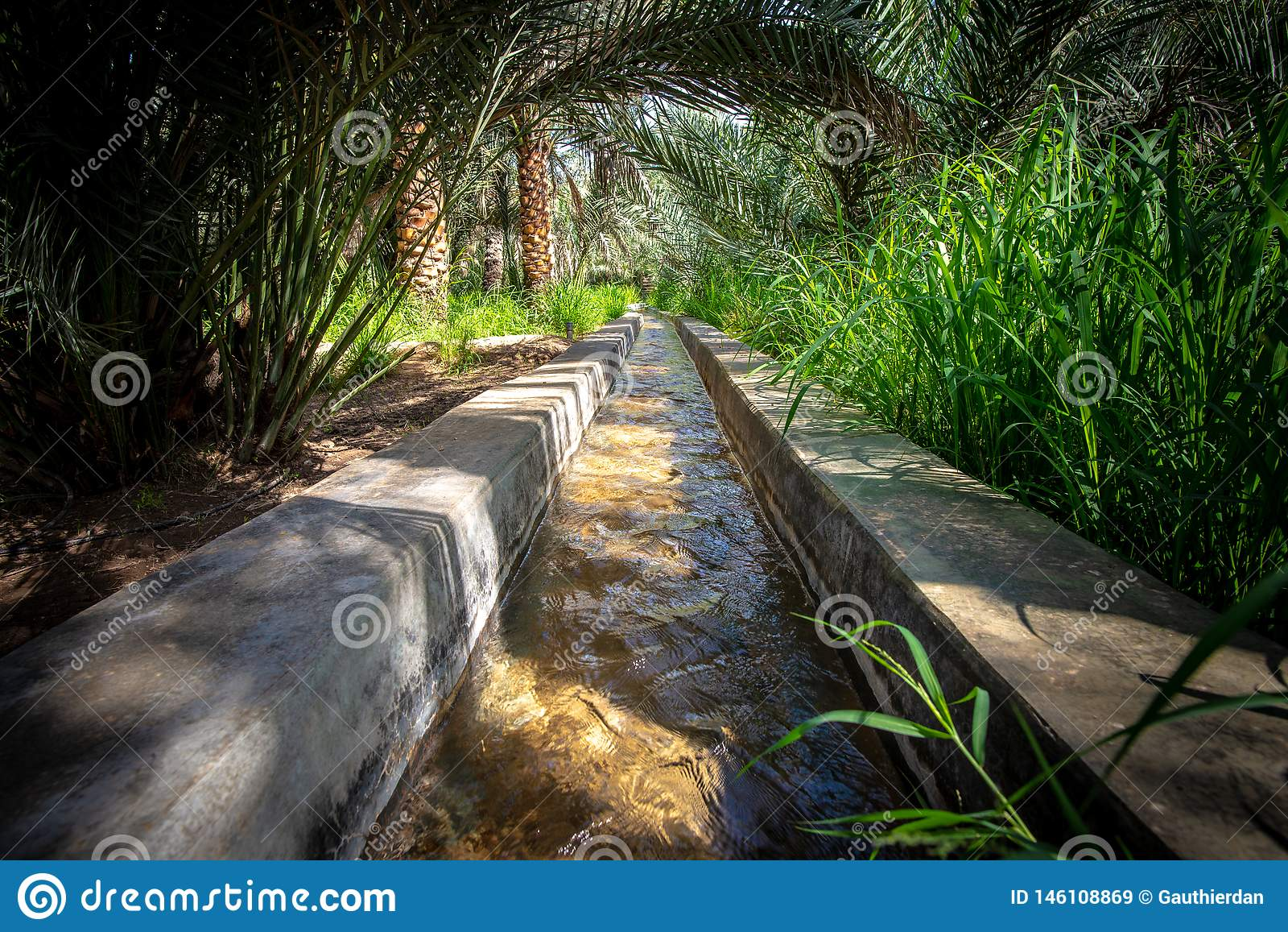 Вода пропуская в falaj в очень оазисе зеленого цвета