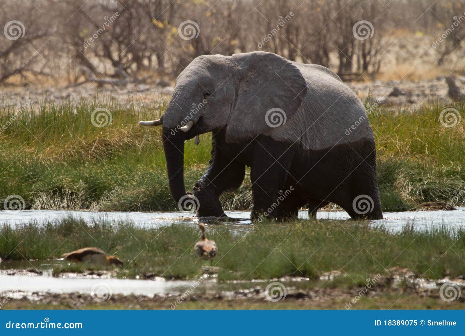 вода слона