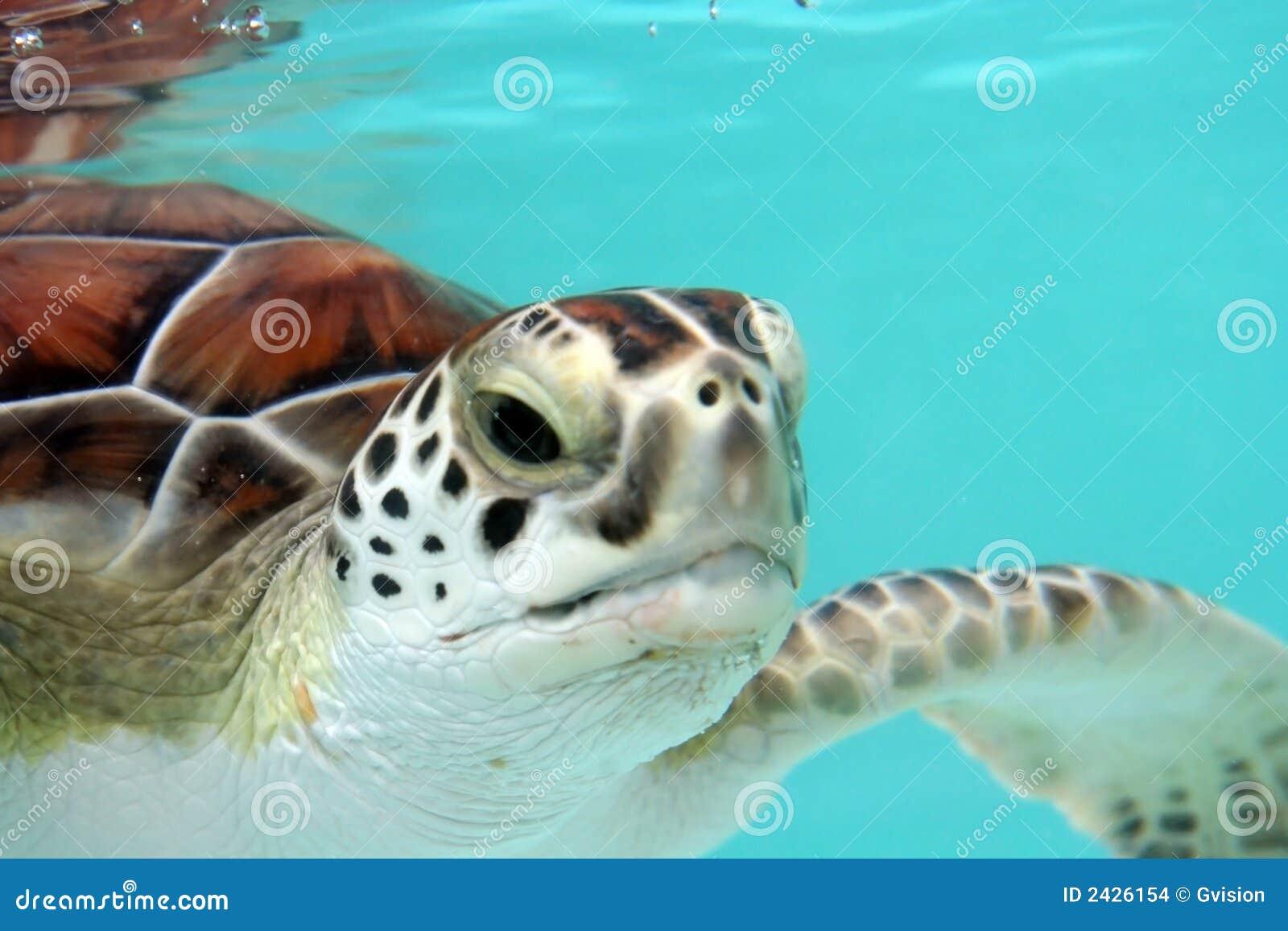 вода черепахи