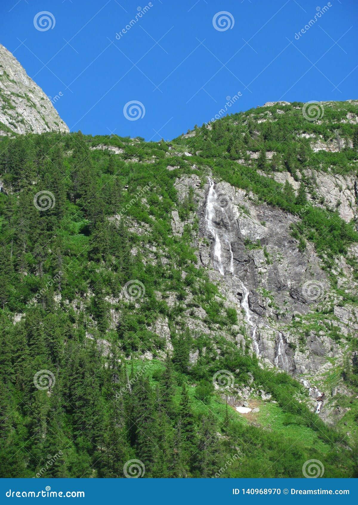 Водопад окруженный зеленым лесом
