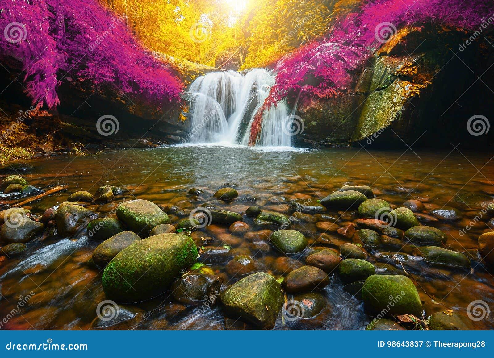 Водопад Phu Soi Dao с желтым цветом и пинком выходит осень деревьев,