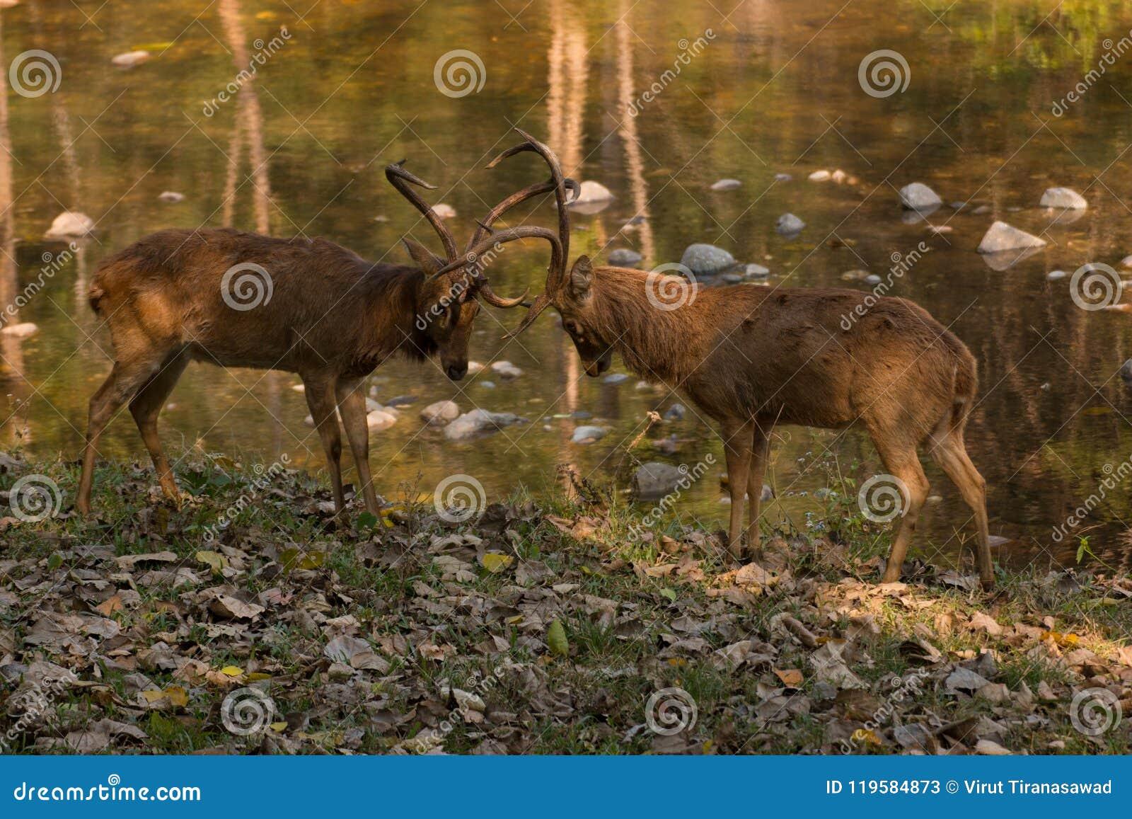 воевать deers
