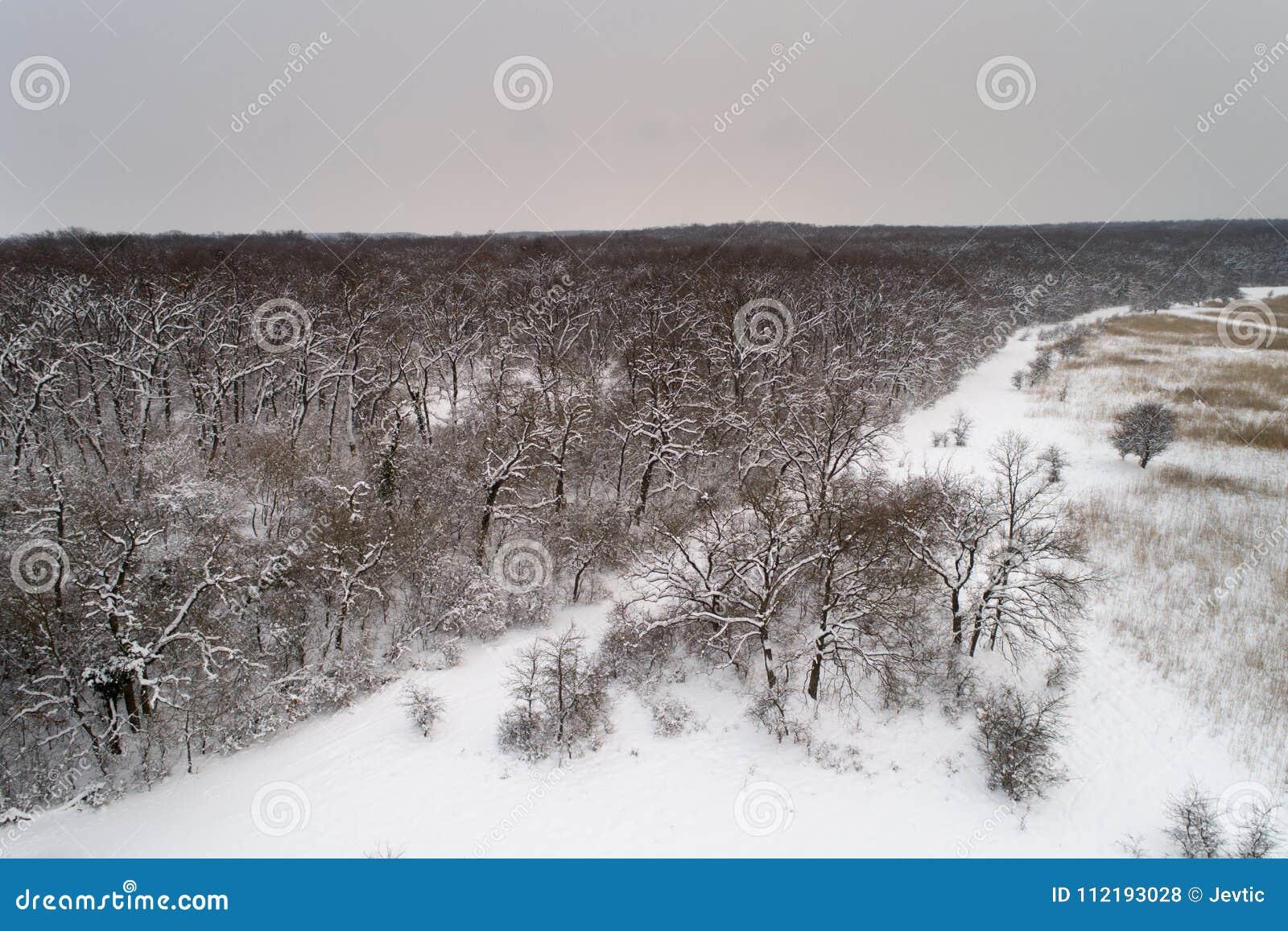 Воздушное изображение лиственного леса покрытое с снегом