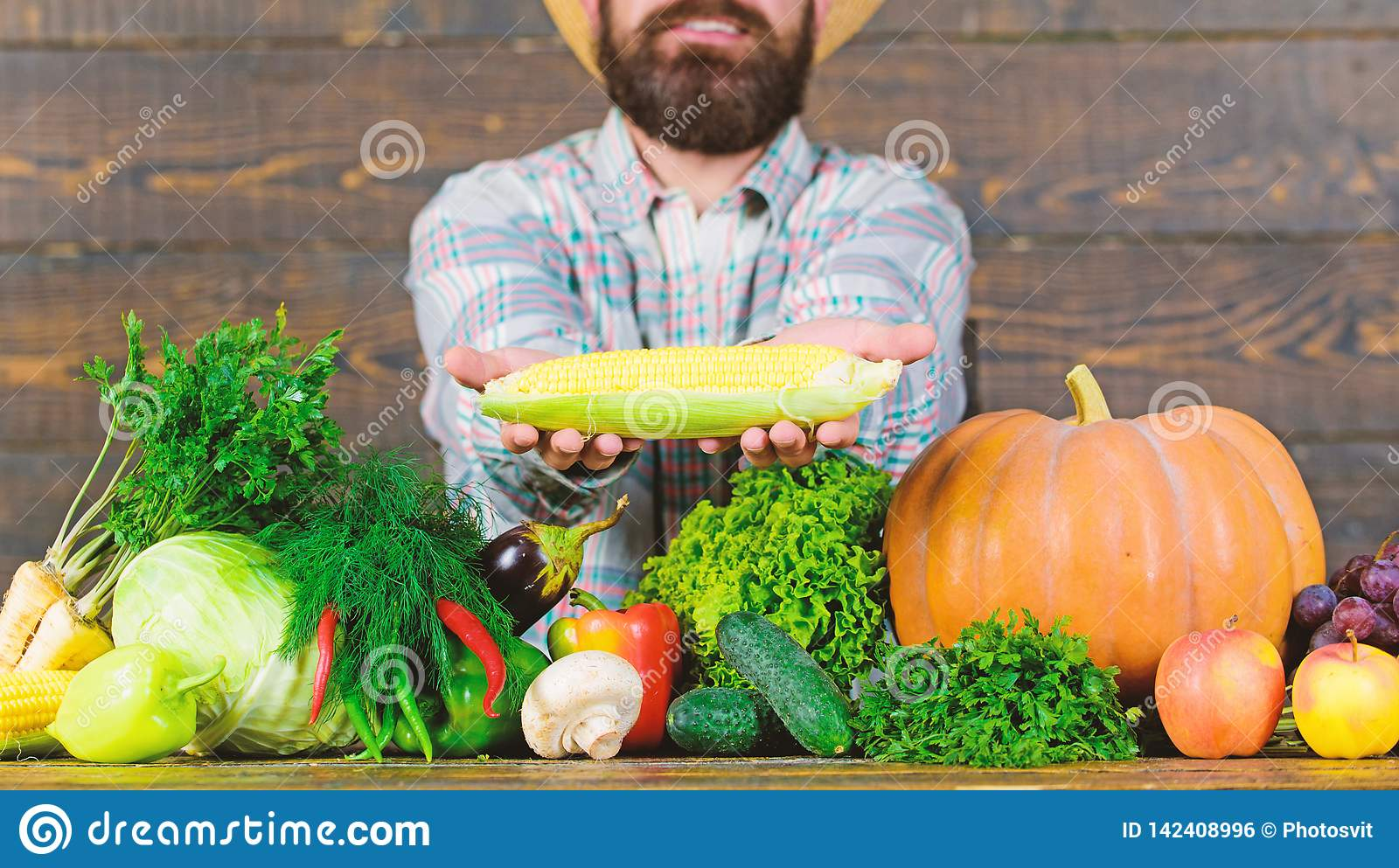 Возникновение сельчанина фермера деревенское Вырастите органические урожаи Соломенная шляпа фермера представляя свежие овощи Чело