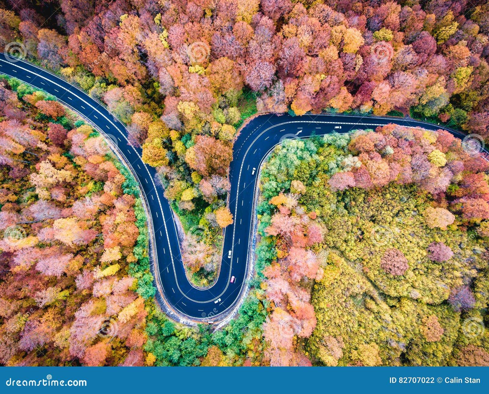 Воздушный взгляд трутня изогнутой извилистой дороги через лес высокий