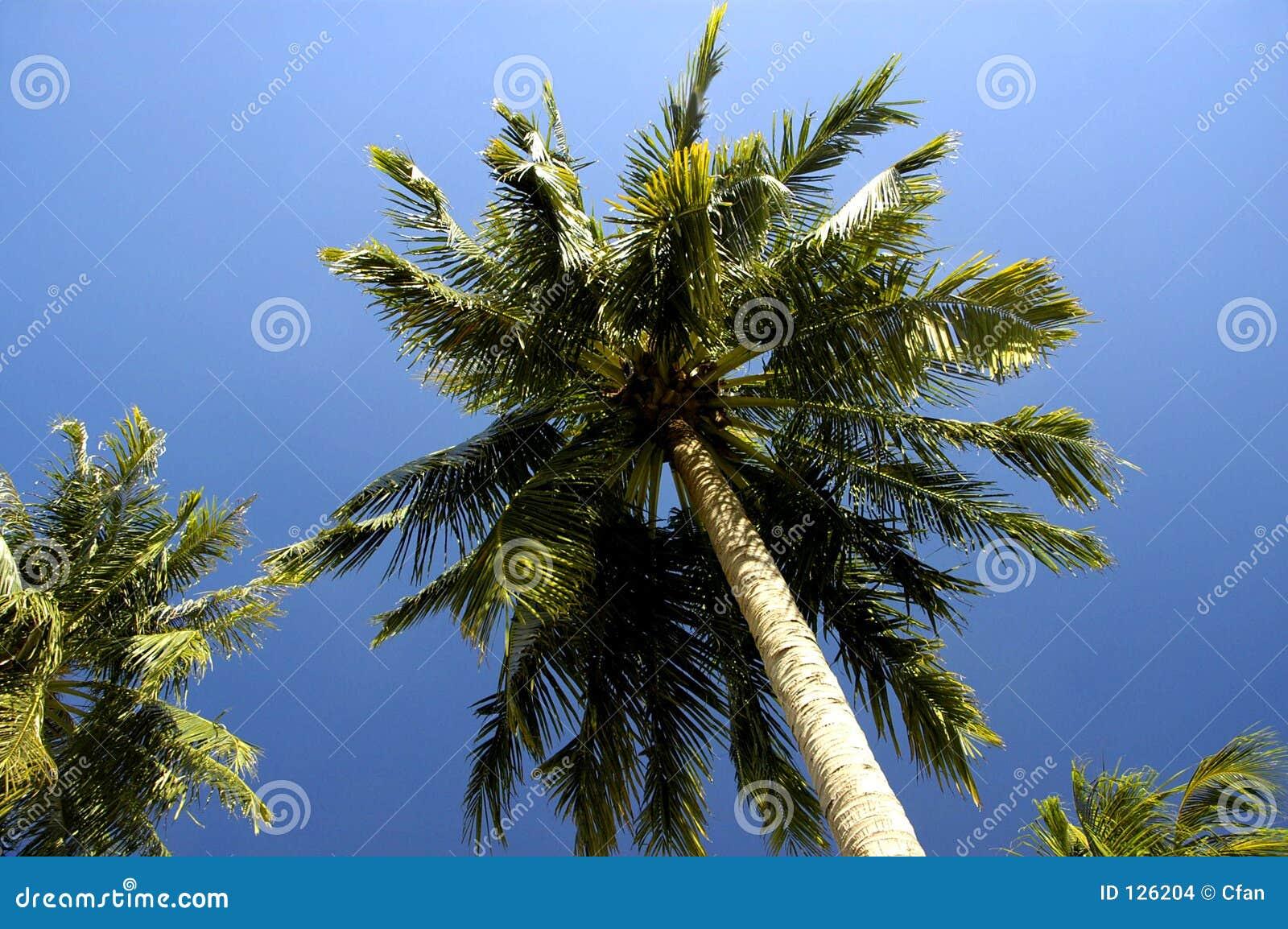 вокруг пляжа singapore
