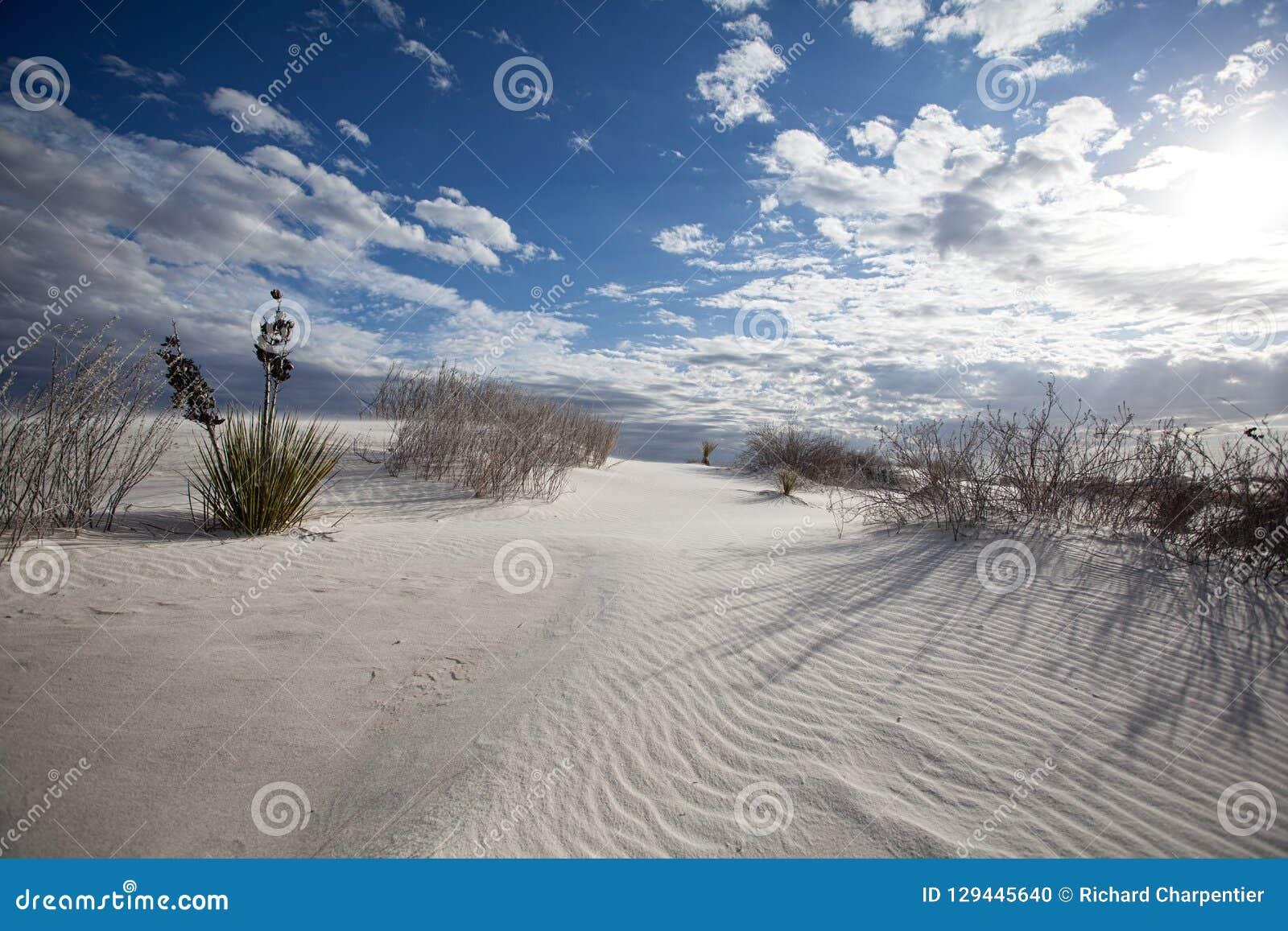 Волны песка и национальный монумент песков картин белый