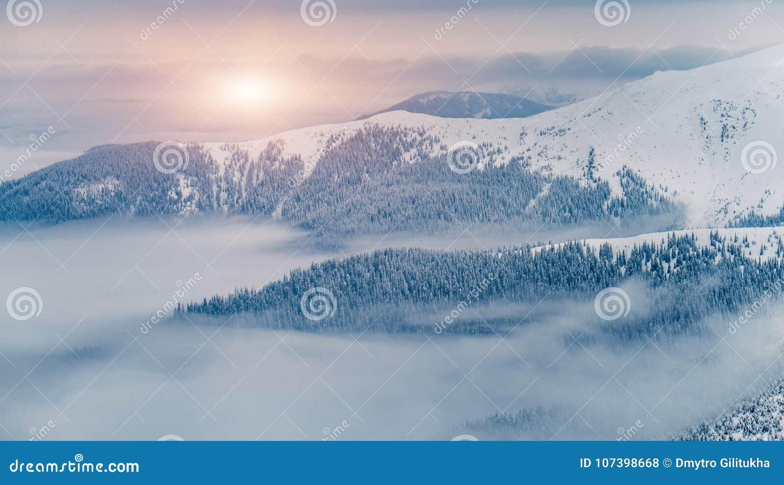 Волшебные ели покрытые снегом в горах