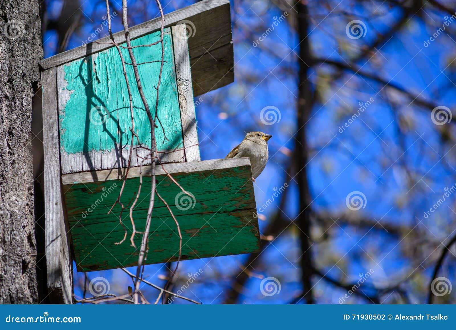 Воробей сидя на дереве в кормушке