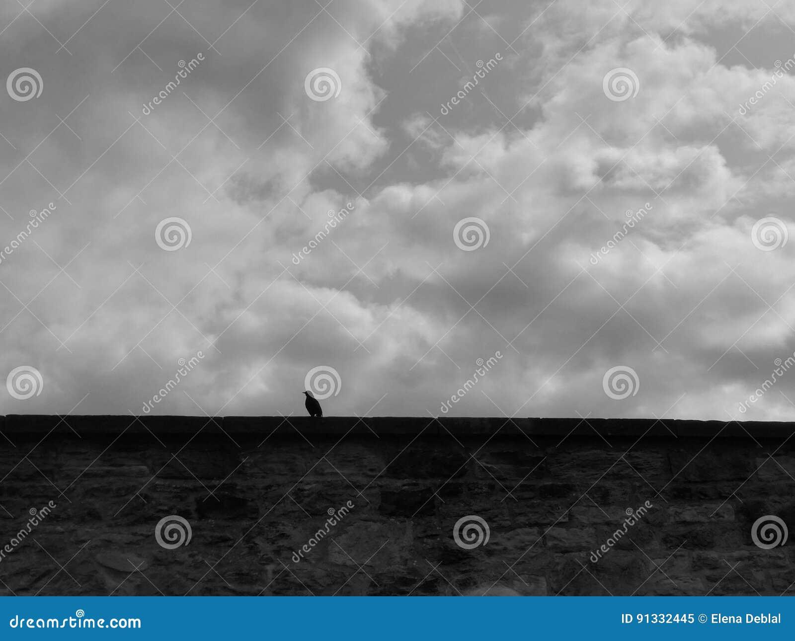 Ворона на стене кладбища