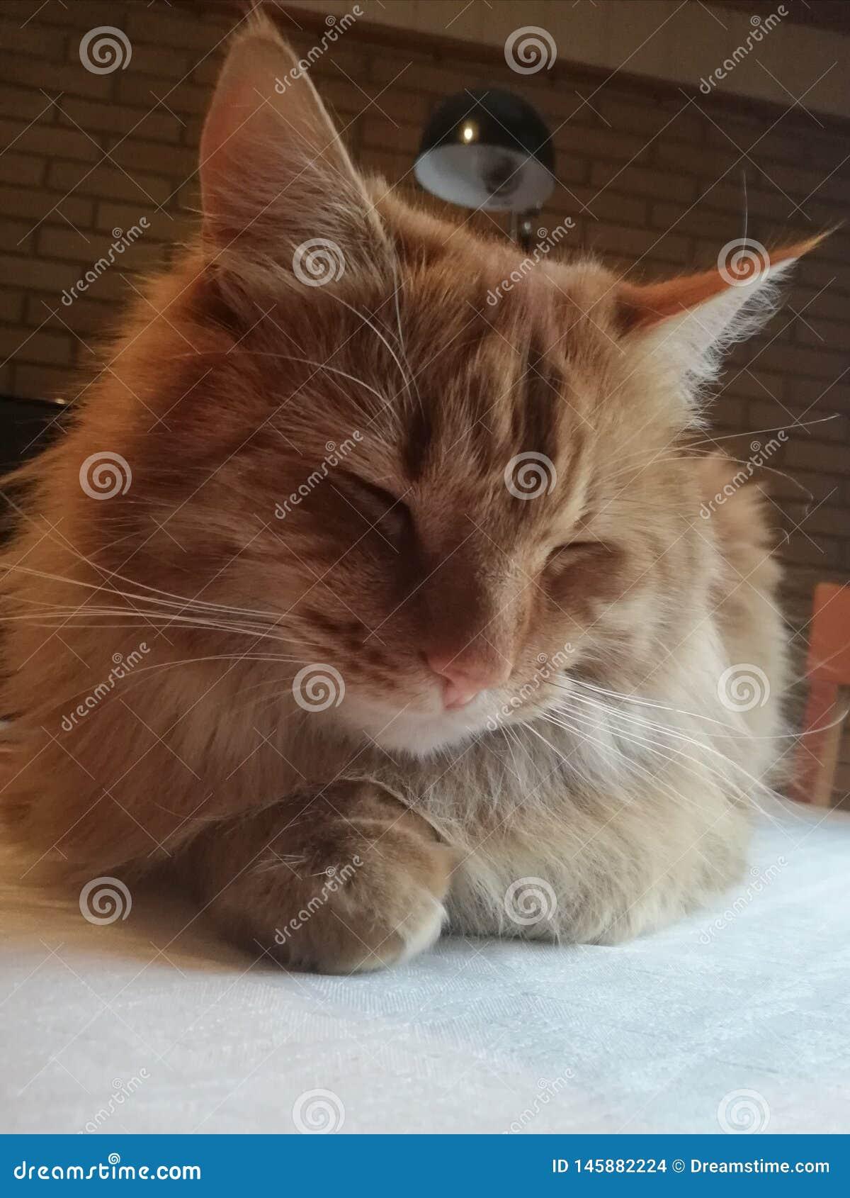 Ворсина кота столешницы