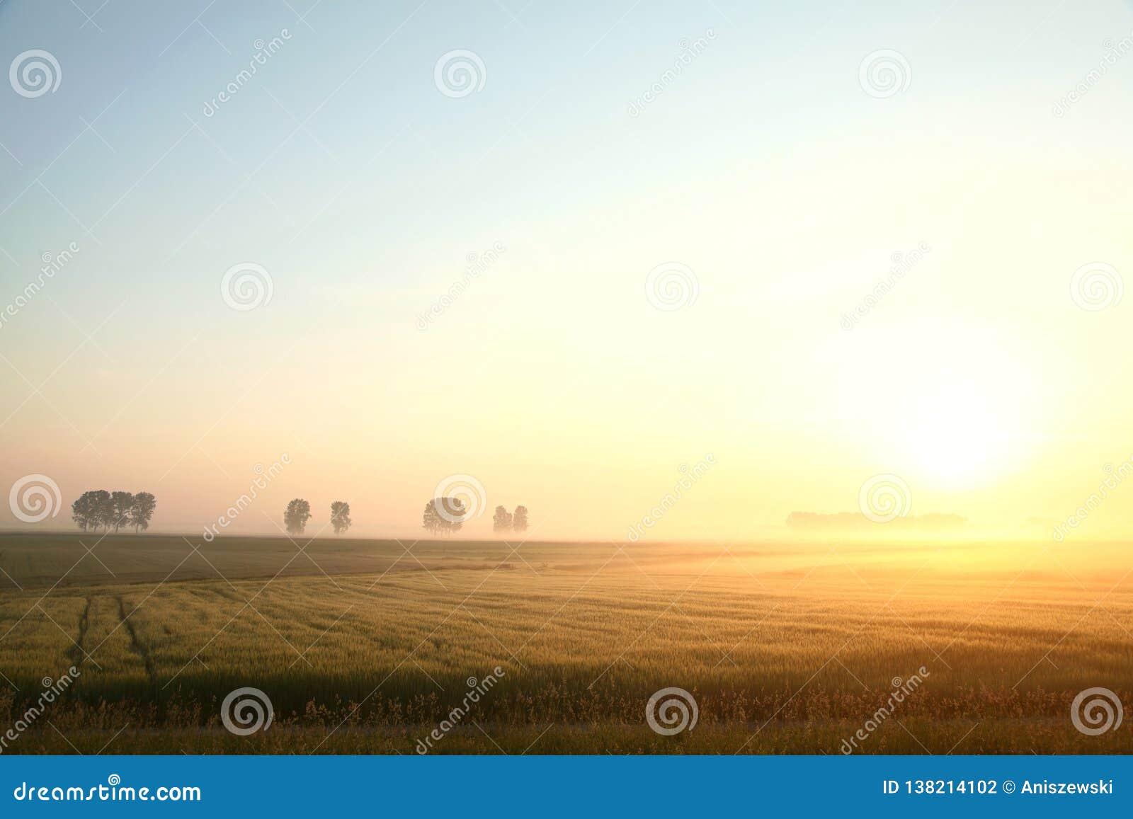 Восход солнца весны над полем зерна