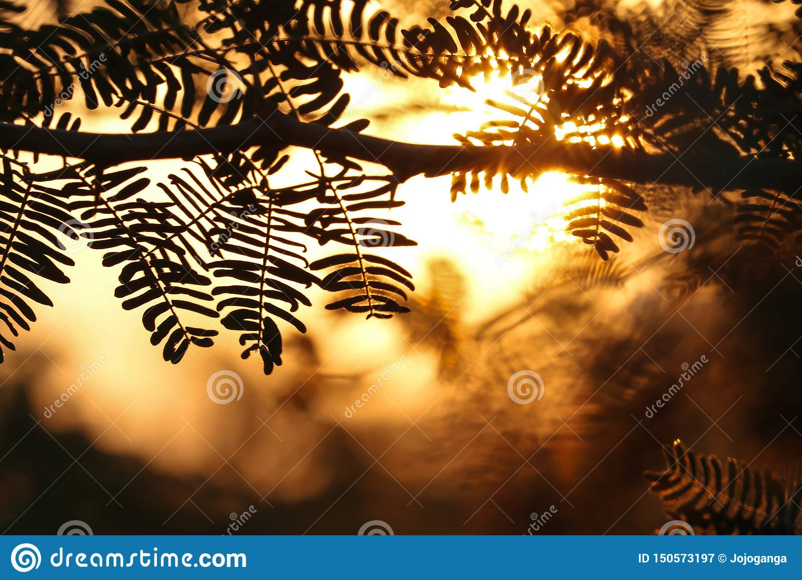 Восход солнца между листьями