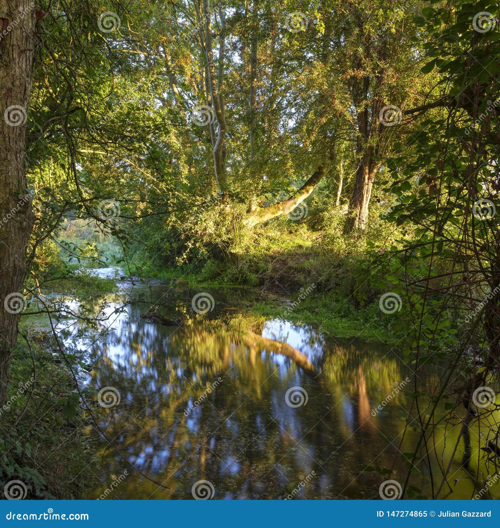 Восход солнца осени на реке Itchen - известном потоке кровати мела известном для рыбной ловли мухы - между Ovington и Itchen Абба