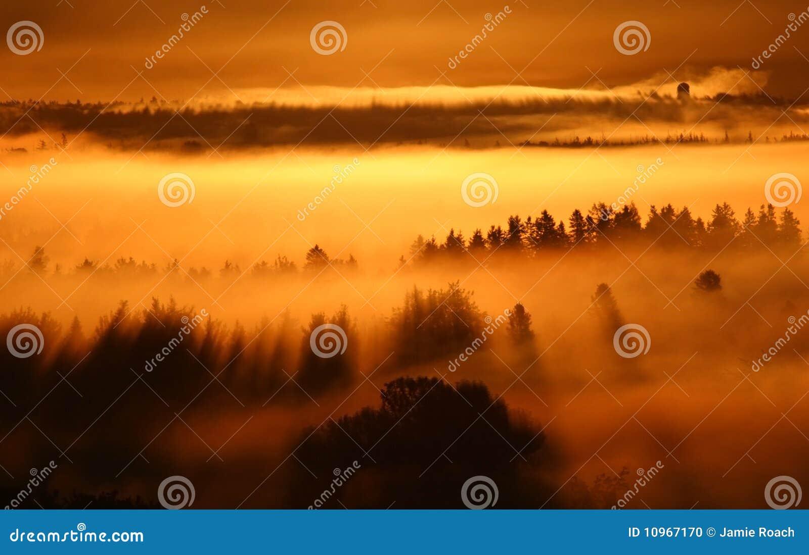 восход солнца тумана