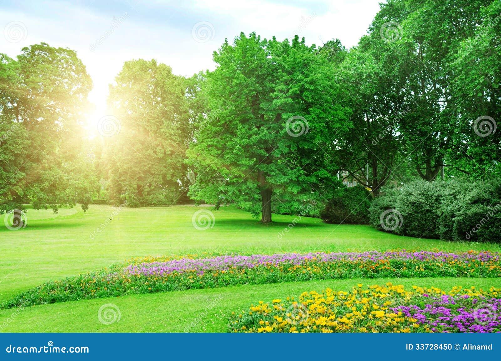 Восход солнца в l парке лета