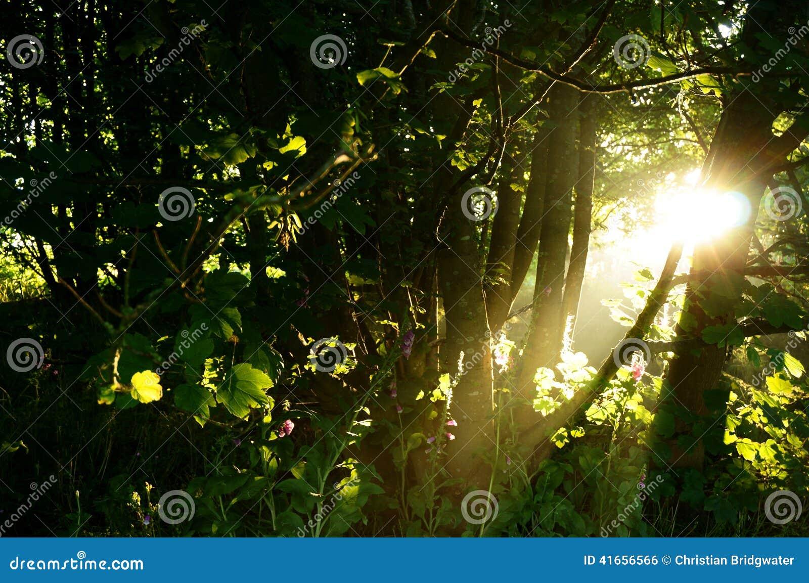 Восход солнца a дерева солнечного света