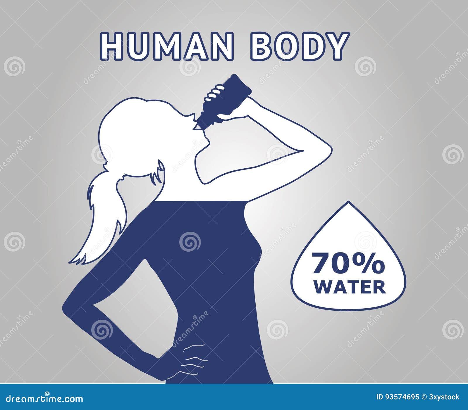 Вода человеческого тела