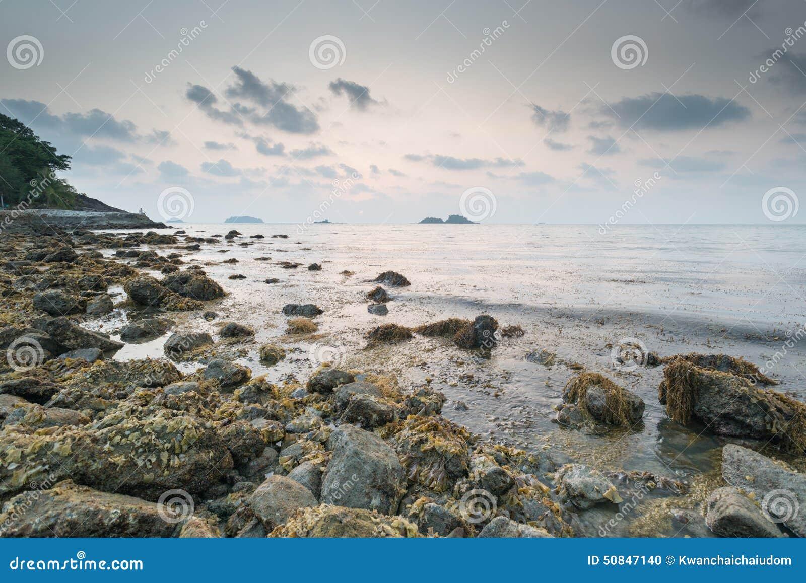 Водоросли морской водоросли Брайна на утесе в заходе солнца