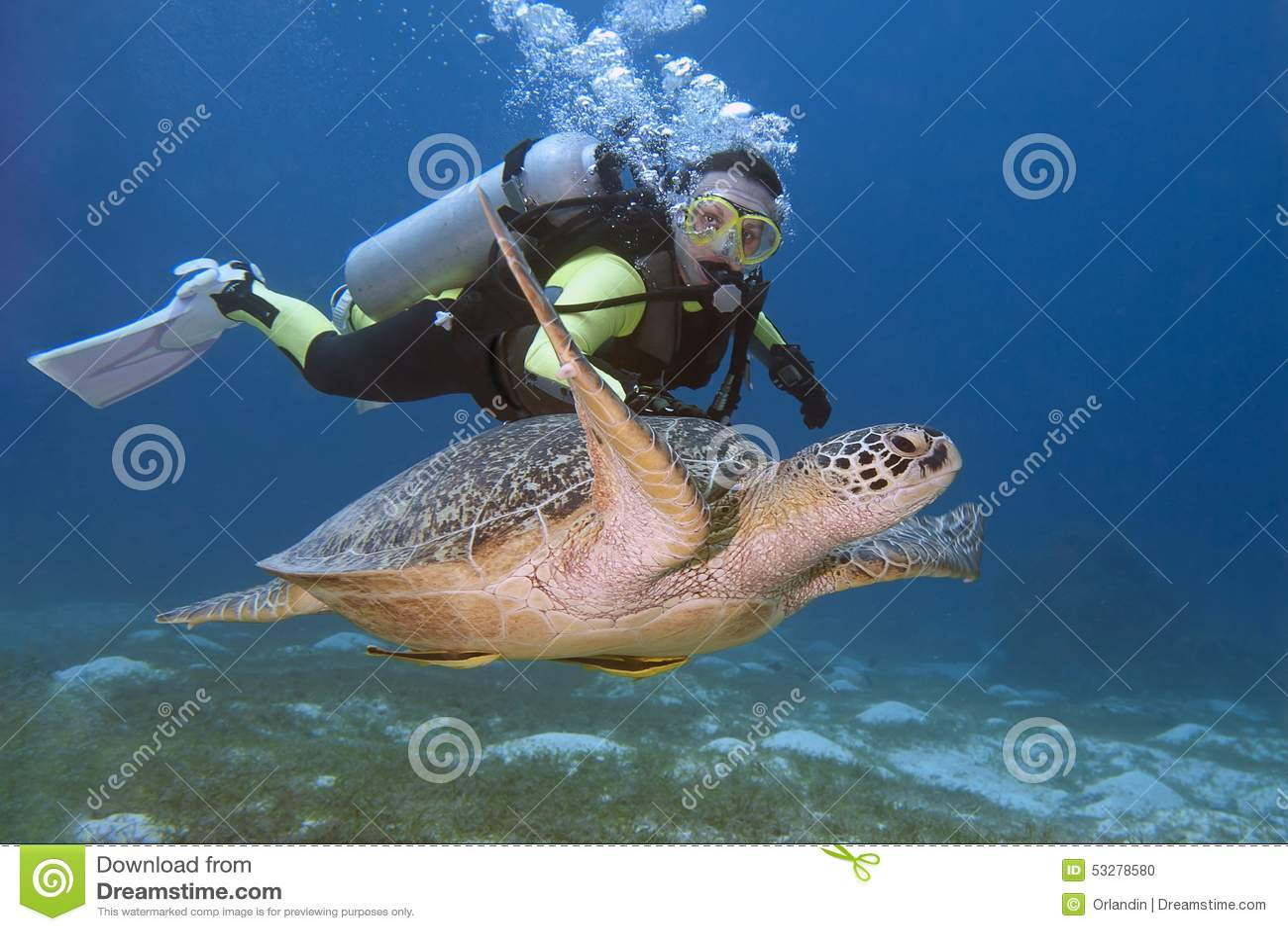 Водолаз и черепаха